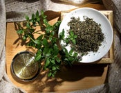 Image of Egyptian Peppermint