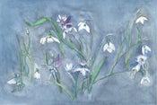 Image of Snowdrop Flower Fairies Print