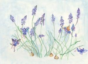 Image of Grape Hyacinths Flower Fairies Print