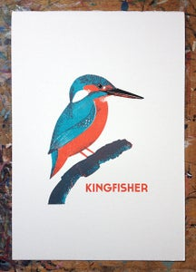 Image of Kingfisher