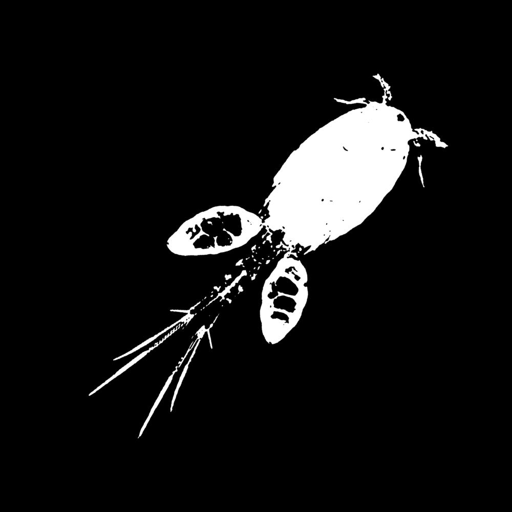 Image of Freshwater Copepod