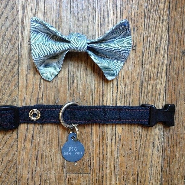 Image of bow-tie collar