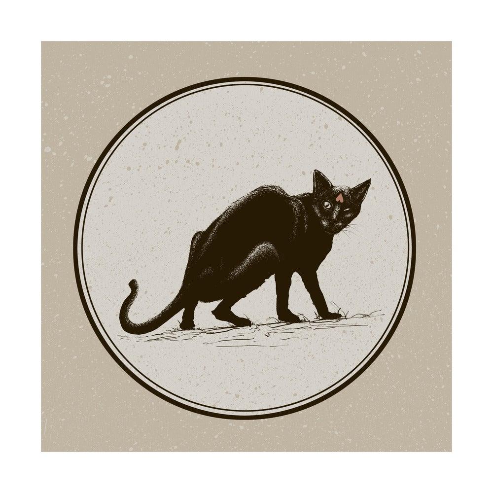 Image of Black Cat Black Cat