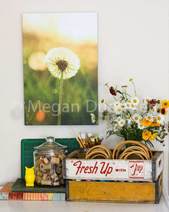 Image of Dandelion Fluff Canvas