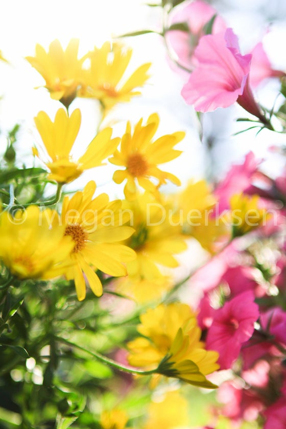 Image of Flowers in the Wind Print
