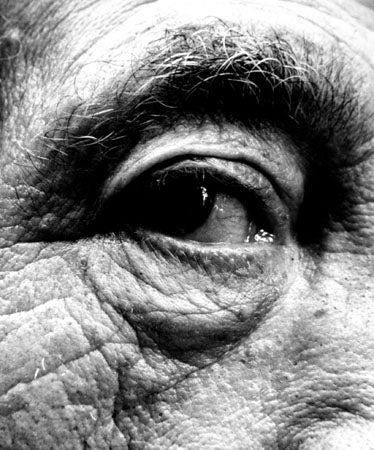 Image of Giacometti's Eye, 1963