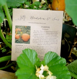 Image of Bradshaw & Sons Mammoth Pumpkin Seeds