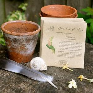 Image of Bradshaw & Sons Foxglove Seeds