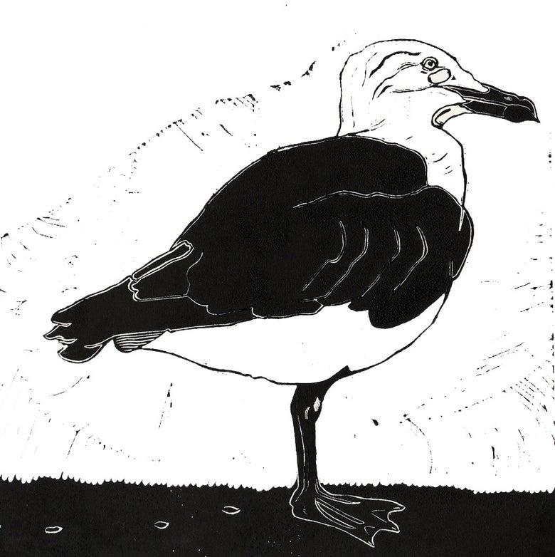Image of Black Backed Gull