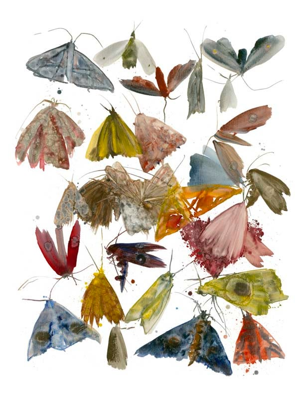 Image of Allyson Reynolds - Moths 1