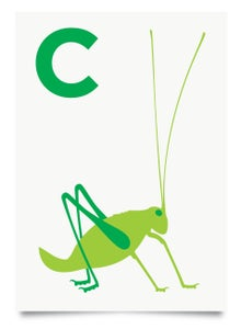 Image of C is for Cricket print