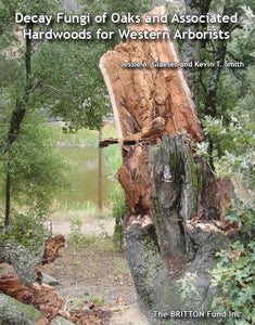 Image of Decay Fungi of Oaks and Associated Hardwoods for Western Arborists