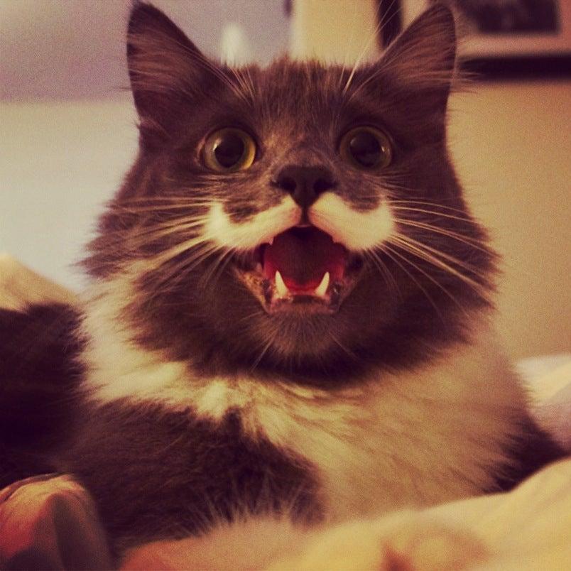 Image of Hamilton The Hipster Cat 2014 Calendar!