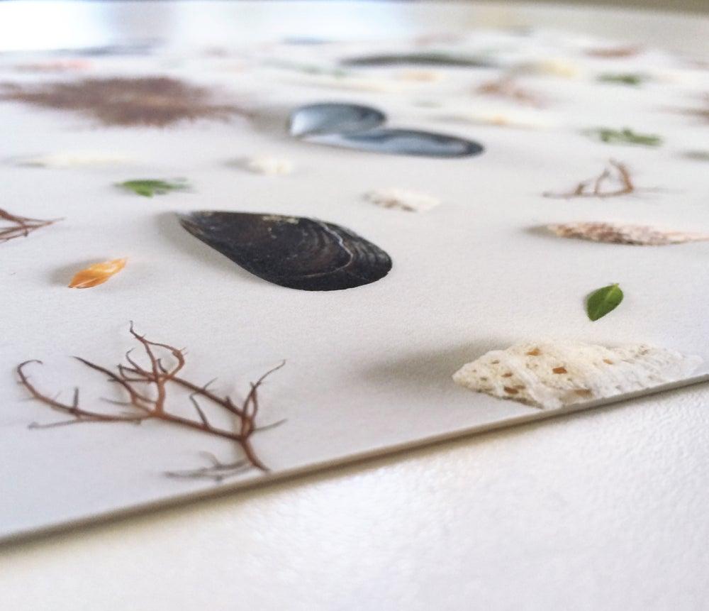 Image of Seashells