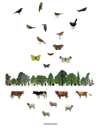 Image of Nature Explained