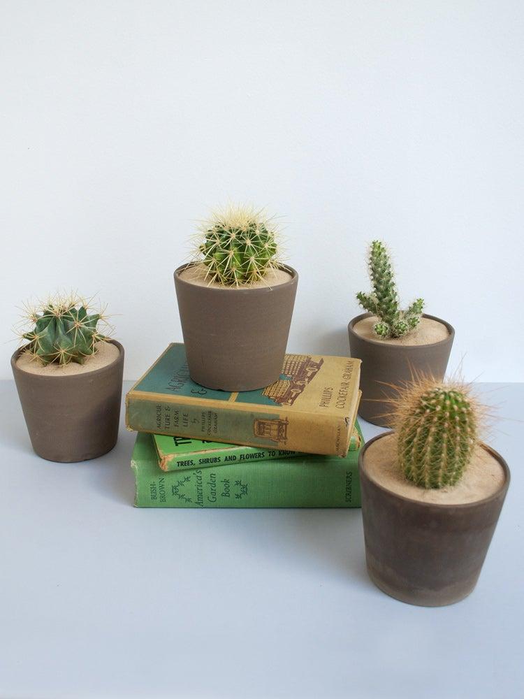 Image of Living Desert Cactus