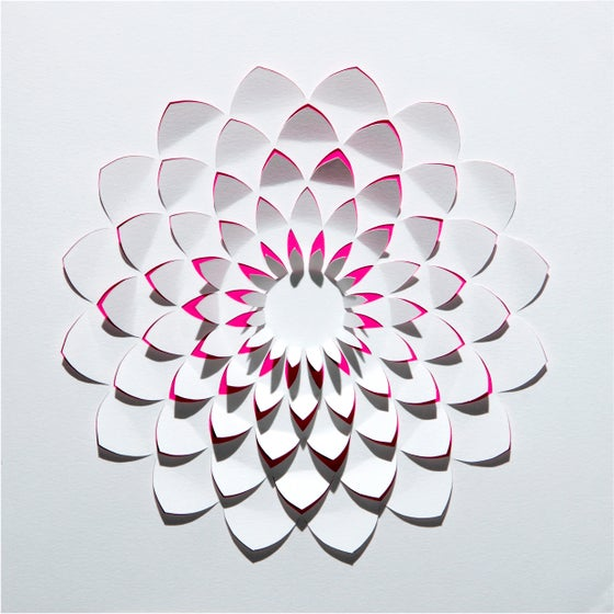 Image of crisantemo / chrysanthemum