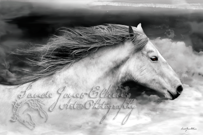 Image of If I Could Fly, 16x24 inch Equine Print