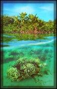 Image of Slack Water Grove | Landscapes