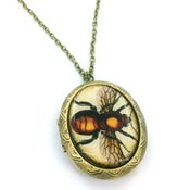 Image of Vintage Style Bee Entomology Locket Necklace