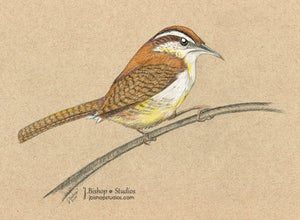 Image of Carolina Wren - Original Graphite Drawing - 8 x 10