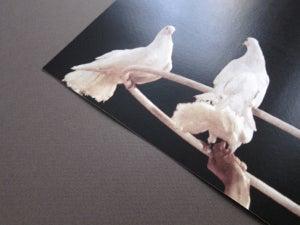 Image of Cirkus Birds
