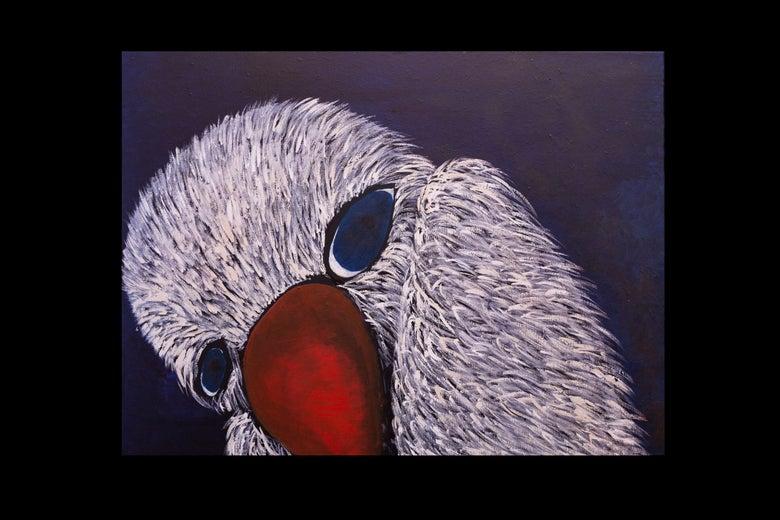 Image of Coy Bird