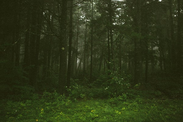 Image of WOODS