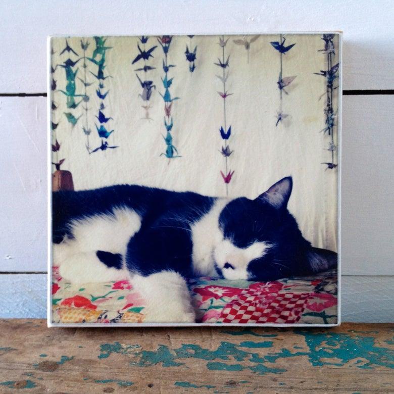 Image of Cat Nap Print On Wood