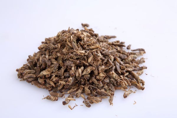 Image of Thai Edible Brown Crickets 100 grams