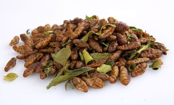 Image of Thai Edible Silkworm Pupae 100 grams