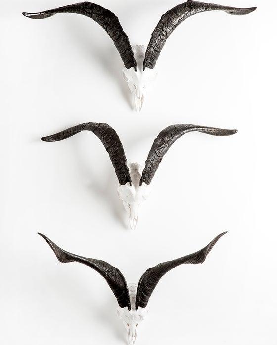 Image of Goat's Skull