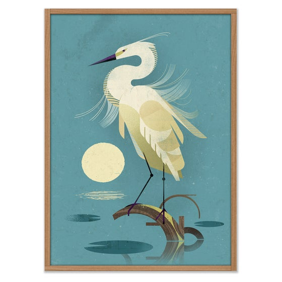 Image of Little Egret