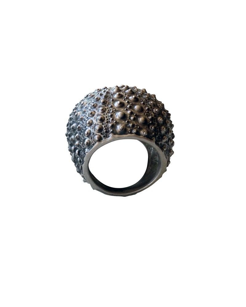 Image of Urchin