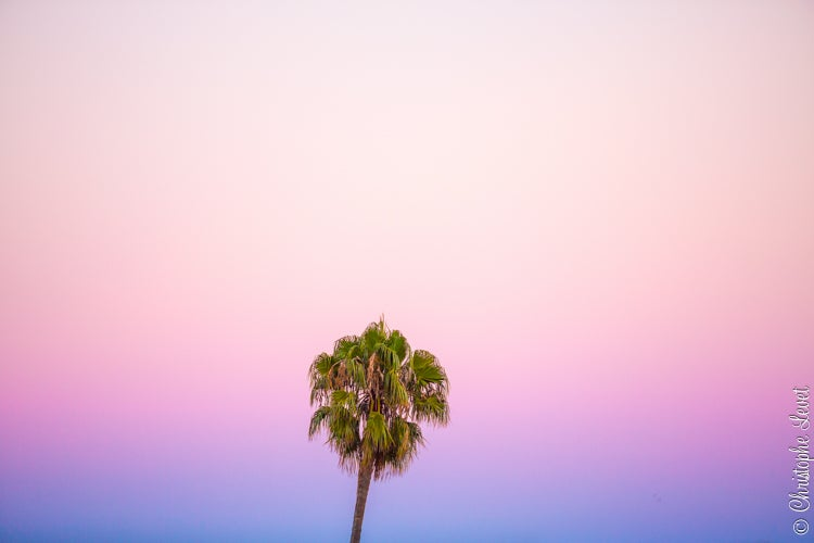Image of The Pink California