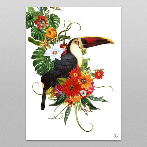 Image of Toco Toucan