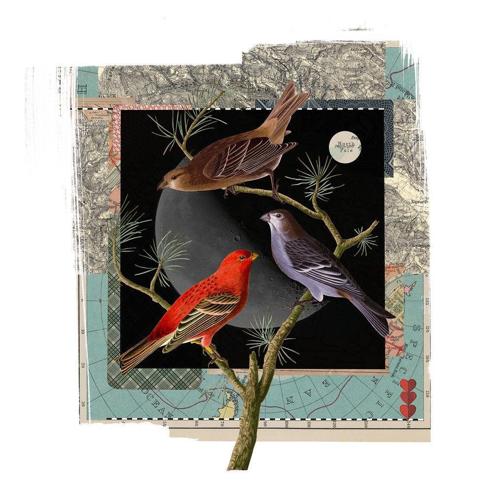 Image of Moonbirds