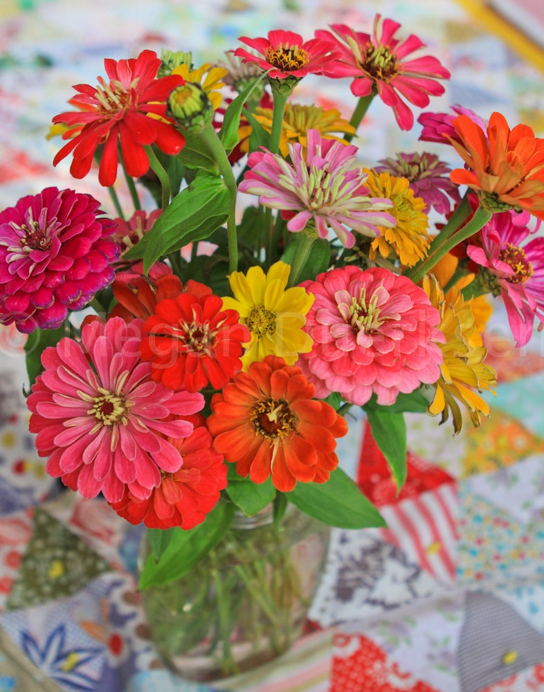 Image of Vase of Zinnias Canvas