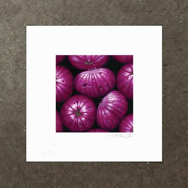 Image of Syzygium Dansie - Art Print