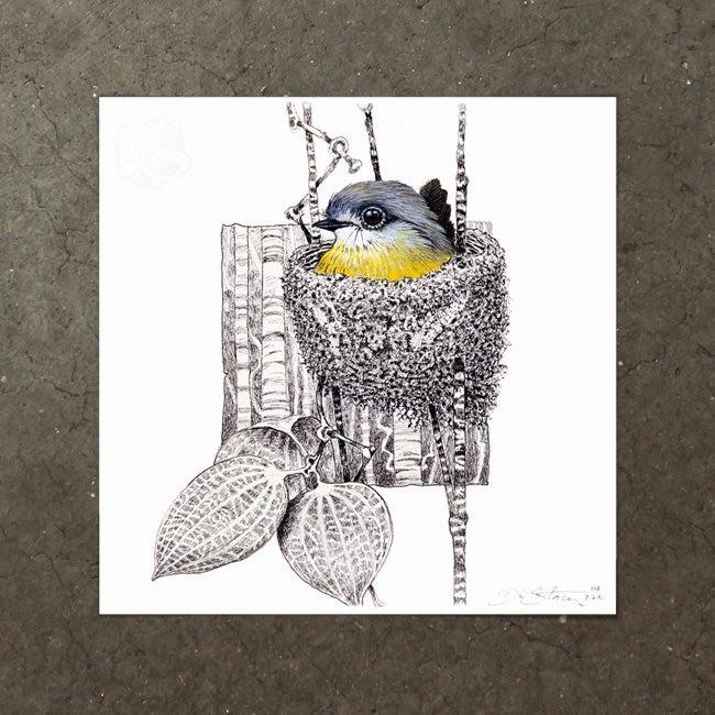 Image of Pale Yellow Robin - Art Print