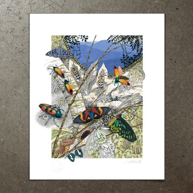 Image of Beetles, Moths and Butterflies - Art Print