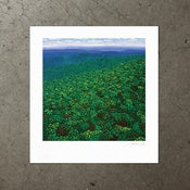 Image of Beyond The Sea of Trees - Art Print