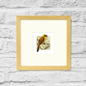 Image of Golden Bowerbird - Framed Print