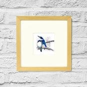 Image of Forest Kingfisher - Framed Print