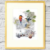 Image of Paradise Kingfisher - Framed Print