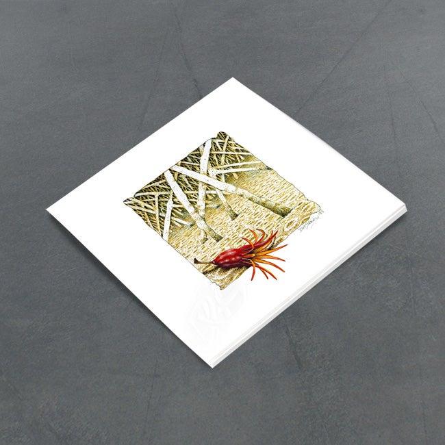 Image of Mangrove Seed Pod - Miniature
