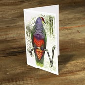 Image of Rose Crowned Fruit Dove - Gift Card