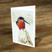Image of 0Azure Kingfisher - Gift Card