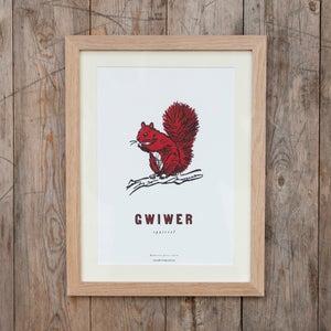 Image of fforest cymraeg: gwiwer