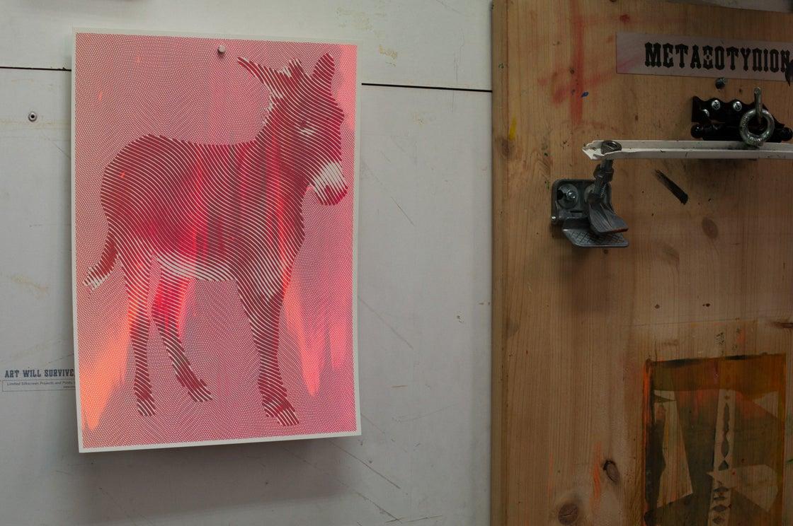 Image of Equus africanus asinus / pay as you wish